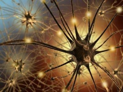 Základní funkční rozdělení nervových vláken