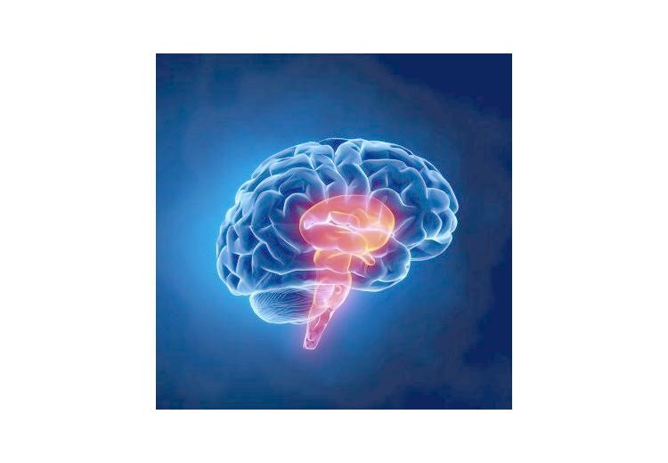 Mozkový kmen - základní principy