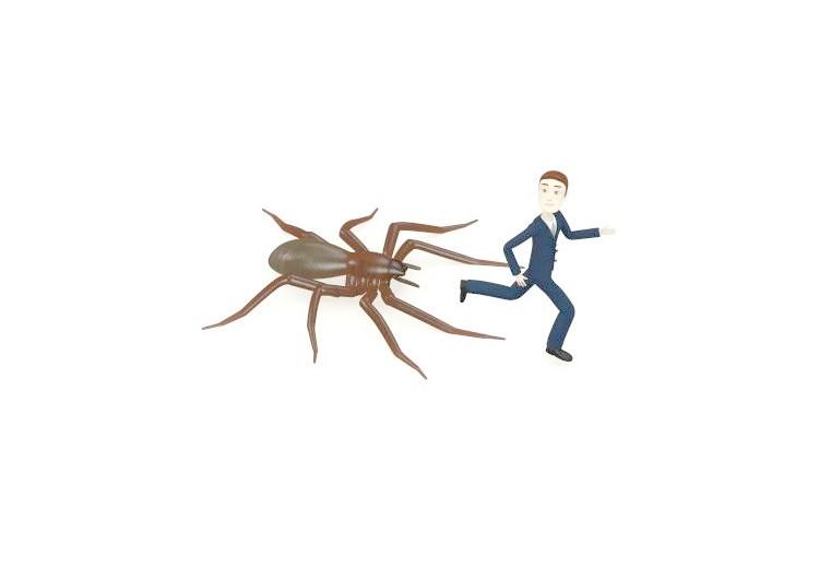 Arachnofobie: příčiny, příznaky a léčba