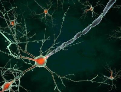 Amyotrofická laterální skleróza: příznaky, příčiny, diagnostika a léčba