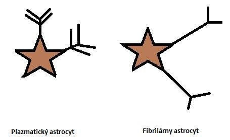 Rozdelenie astrocytov