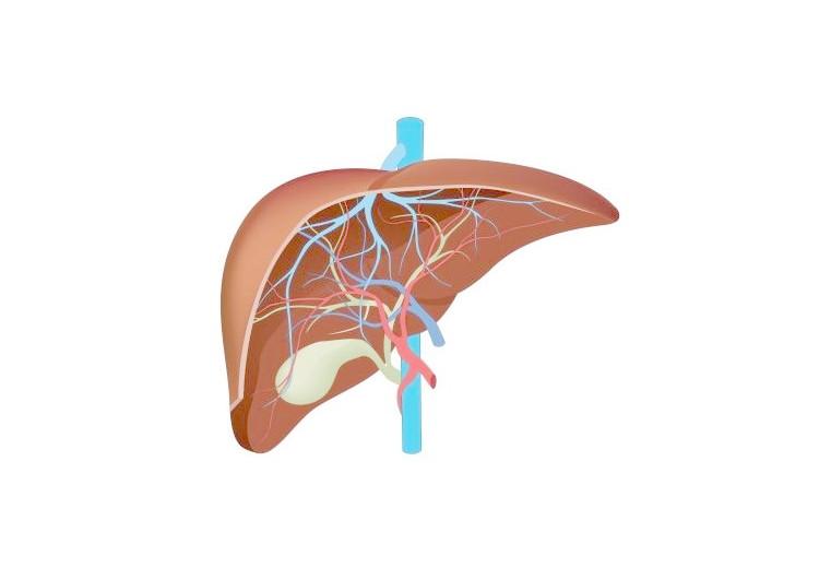 Wilsonova choroba: příčiny, příznaky, diagnostika a léčba