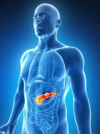 Nádory pankreatu pro mediky