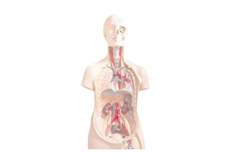 Zánět pobřišnice: příčiny, příznaky, diagnostika a léčba