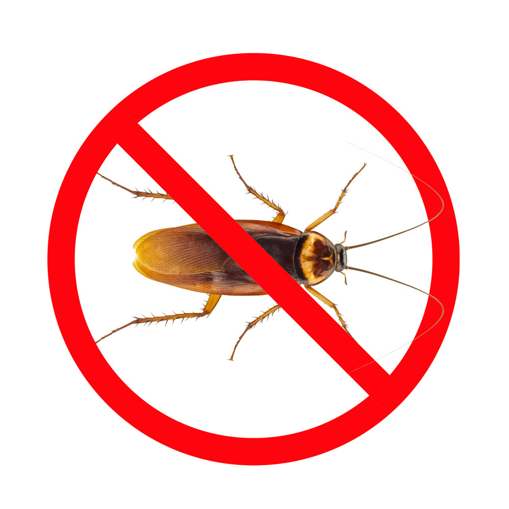 An overview of insects repellents