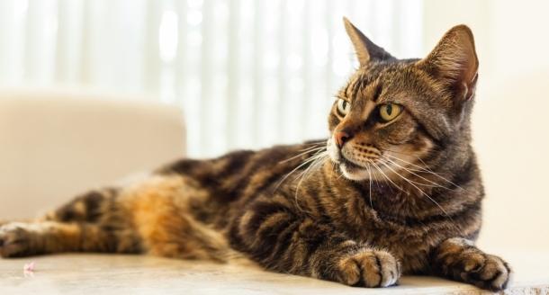 Maladie des griffes du chat - A quel age couper les griffes d un chat ...
