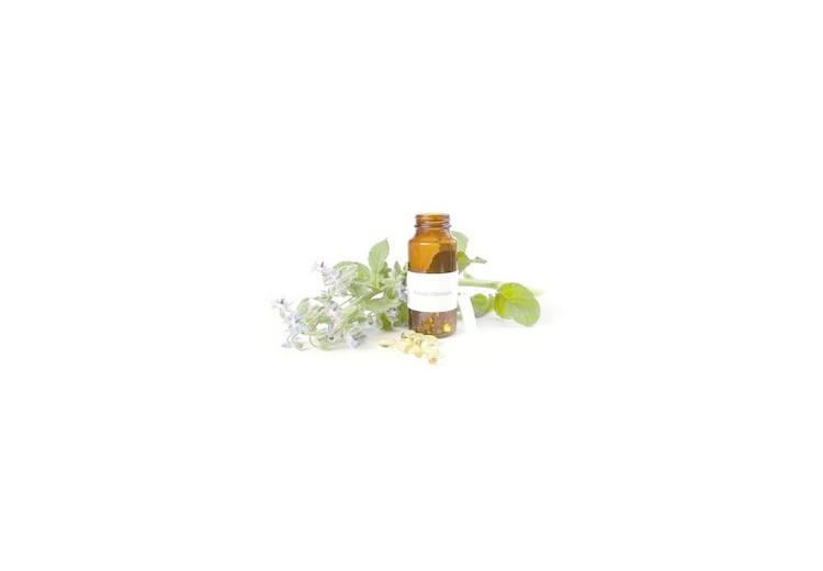 Borákový olej – výhody a lekárske využitie