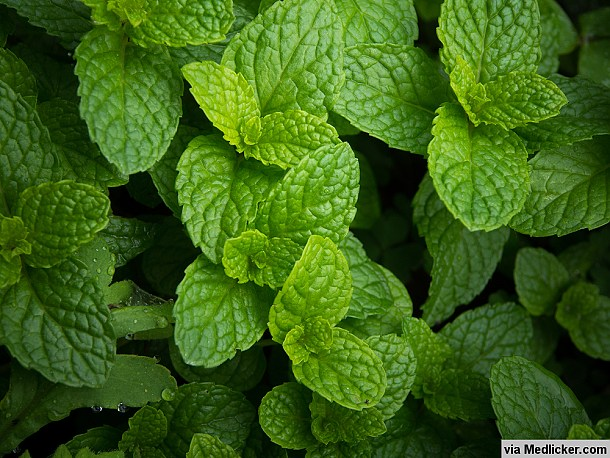 peppermint-leaves