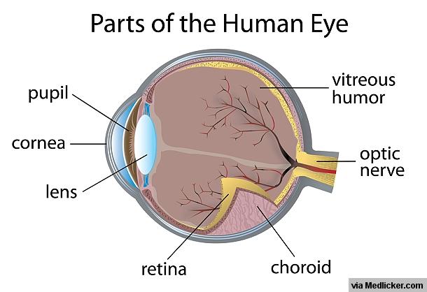 Parts of human eye