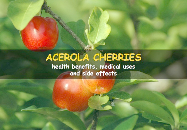 Acerola Cherry: health benefits, medical uses and side effects