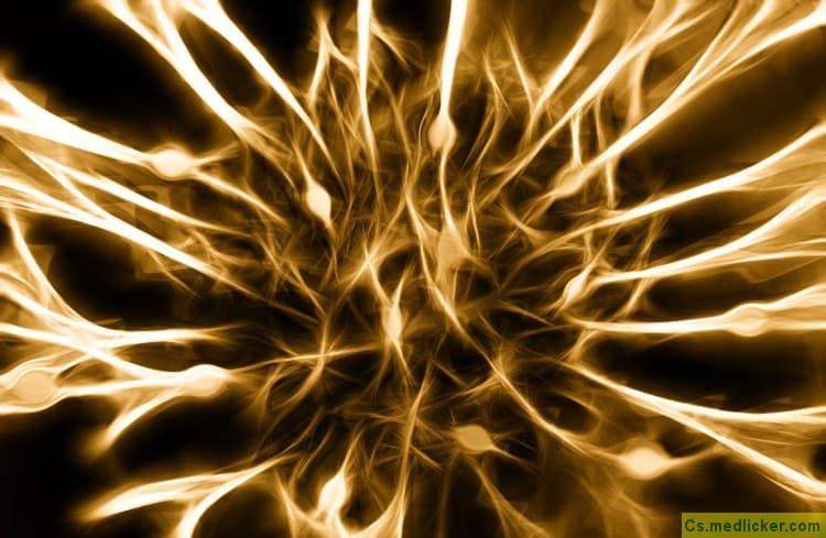 Síť nervových buněk