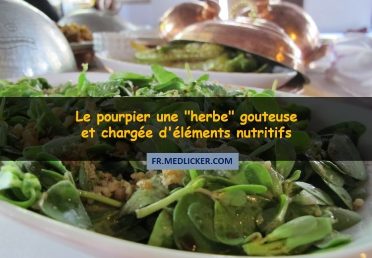 """Le pourpier - une """"herbe"""" gouteuse et chargée d'éléments nutritifs"""