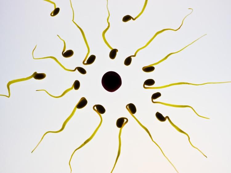 Pohlavní buňky a oplození