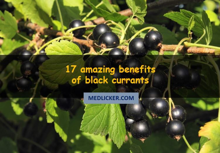 17 benefits of black currant