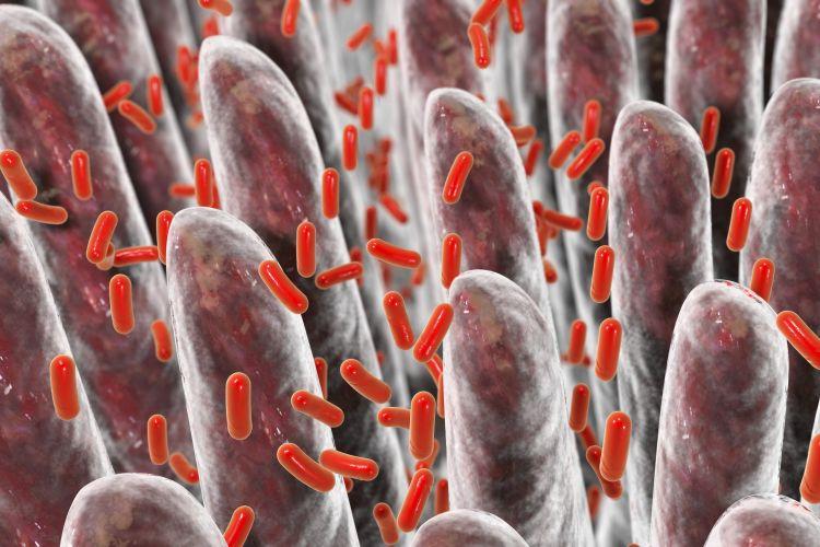 Střevní baktérie: počítačový model
