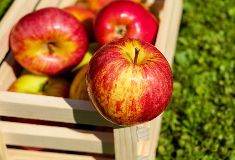 Jablka patří mezi nejzdravější ovoce s bohatým obsahem vlákniny