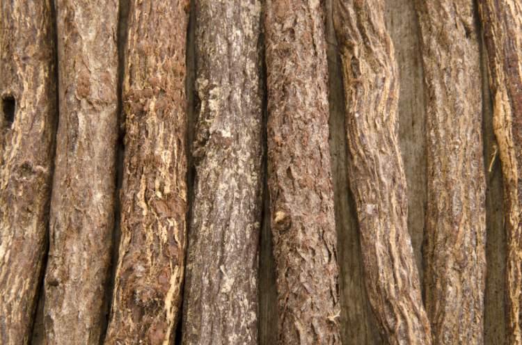 Kořen lékořice má sladkou chuť a řadu léčivých i nežádoucích účinků