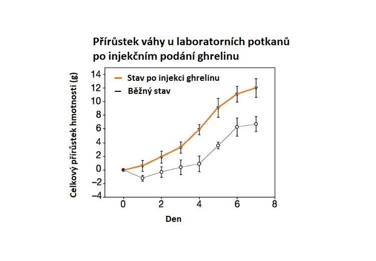 Jak injekční podání ghrelinu ovlivňuje tělesnou hmotnost?