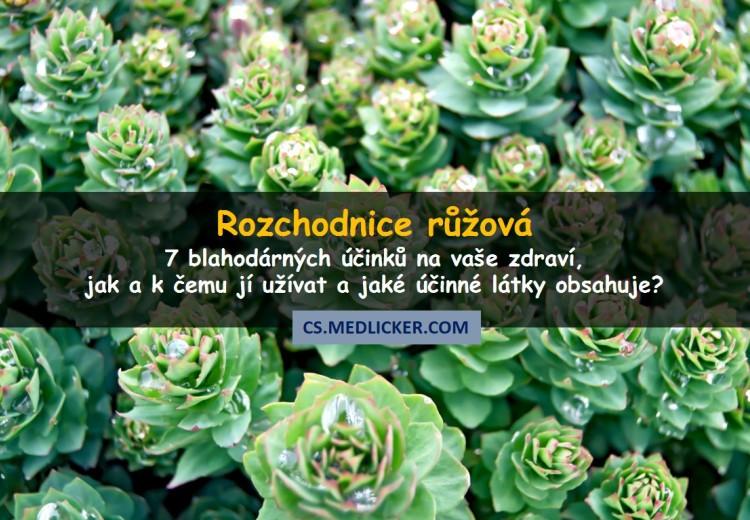 7 vědecky ověřených léčivých účinků rozchodnice růžové (Rhodiola Rosea) na zdraví