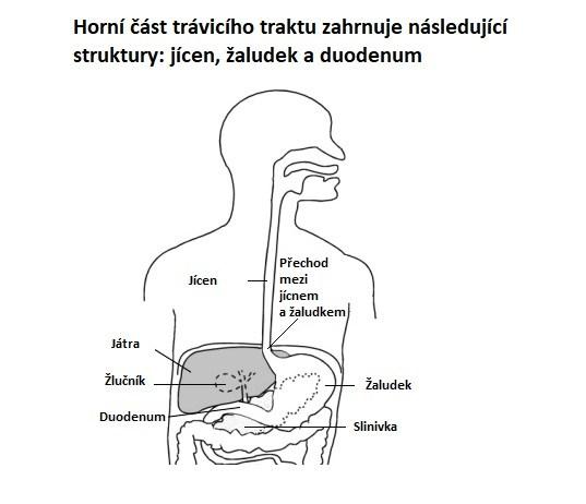 Horní část trávicího traktu - anatomie