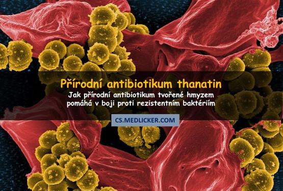Jak přírodní antibiotikum blokuje obranné mechanizmy baktérií?