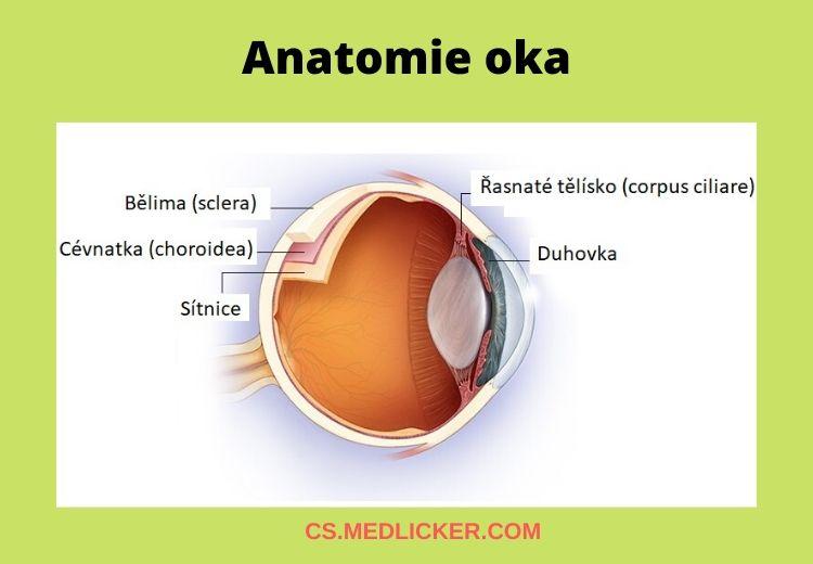 Anatomie oka - vrstvy - článek o uveitidě