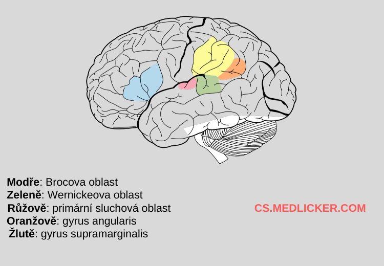 Mozek s vyznačeným Brocovým a Wernickeovým centrem