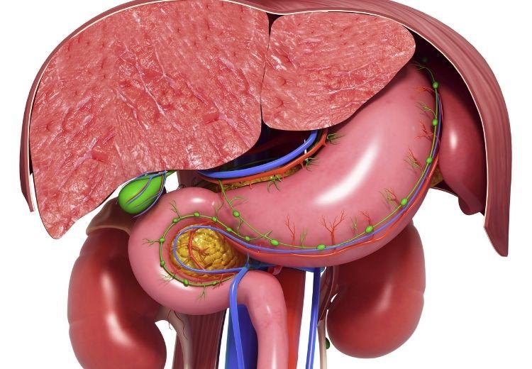Onemocnění sleziny a žaludku jsou častou příčinou bolesti v levém podžebří