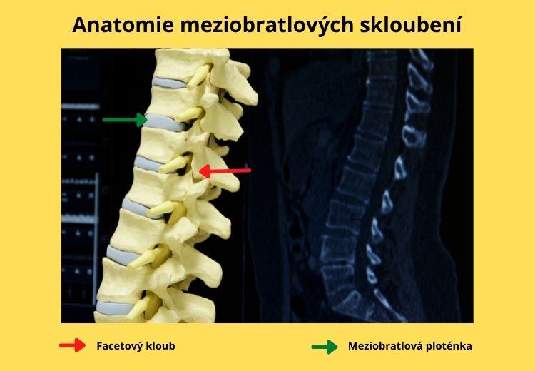 Anatomie intervertebrálních skloubení - meziobratlová destička, facetové klouby