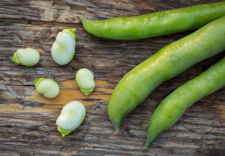 Favismus za svůj název vděčí skutečnosti, že jedním z jeho spouštěcích faktorů je konzumace fazolí fava