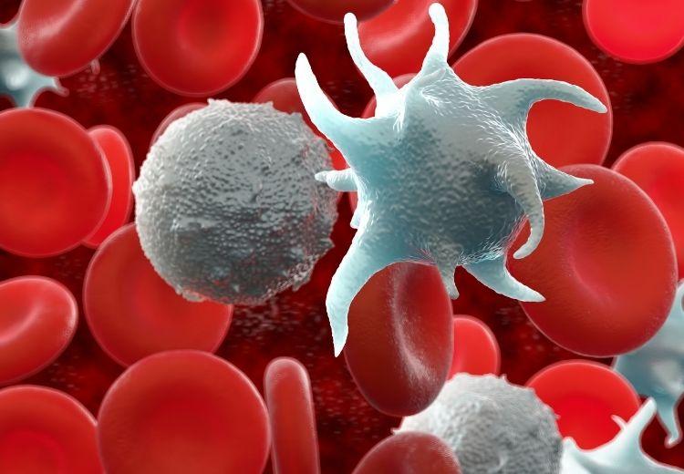 Nízky počet bielych krviniek (leukopénia) zvyšuje náchylnosť k infekčným ochoreniam