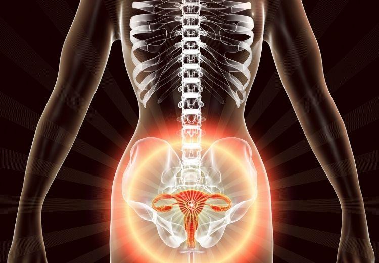 Natažení děložních vazů (ligamentum teres uteri) je častou příčinou bolesti třísel v těhotenství