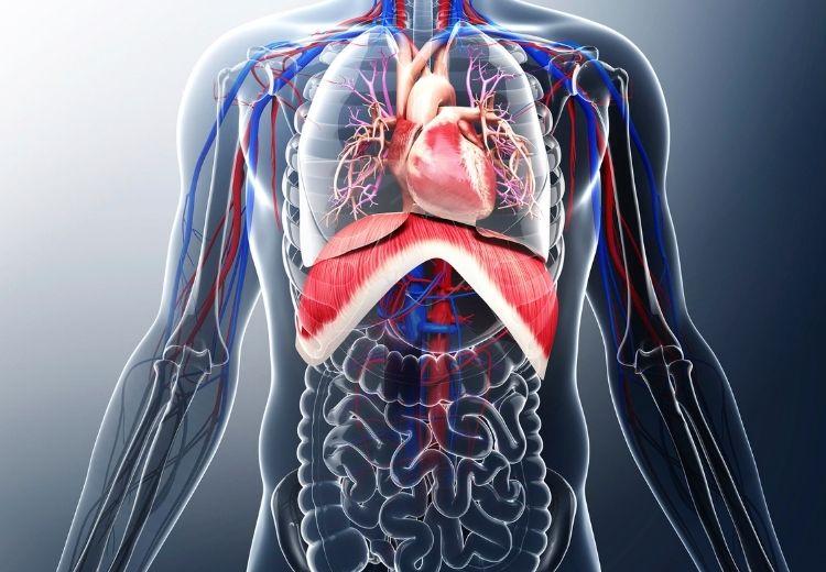 Častou příčinou bolesti na hrudi při nádechu jsou onemocnění plic, srdce nebo pohrudnice (pleury)
