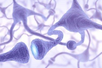 Rozdělení a stavba nervových a gliových buněk
