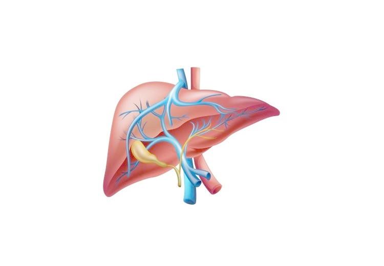 Chronická jaterní porfyrie: příčiny, příznaky, diagnostika a léčba