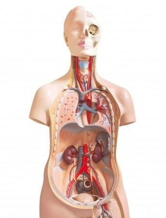 Zápal pobrušnice: príčiny, príznaky, diagnostika a liečba