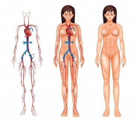 Takayasuova arteritida: příčiny, příznaky, diagnostika a léčba