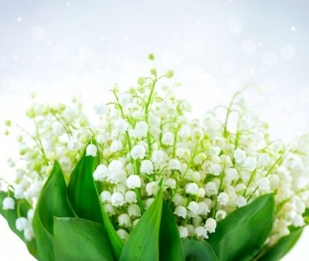 5 Beautiful Yet Poisonous Plants
