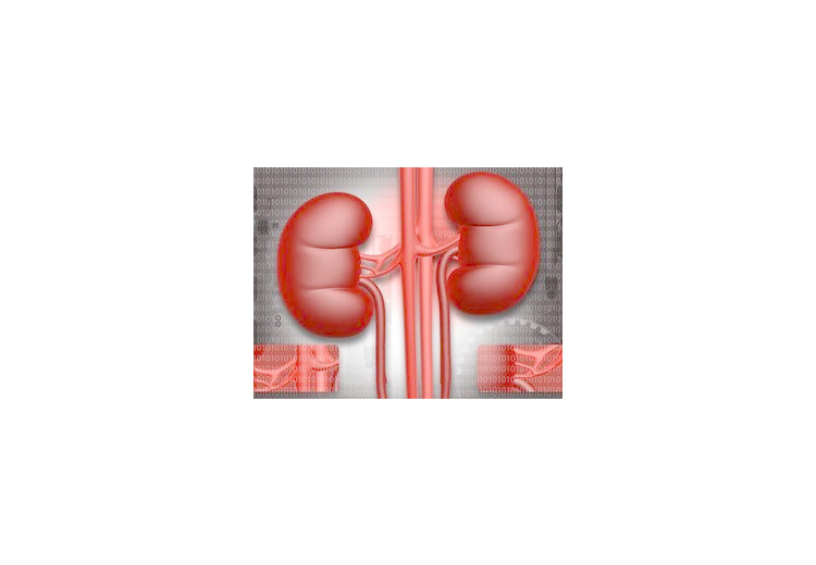 Natural Kidney Function Boosters