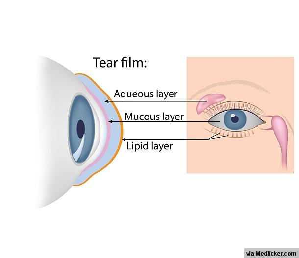 Tear Film Composition