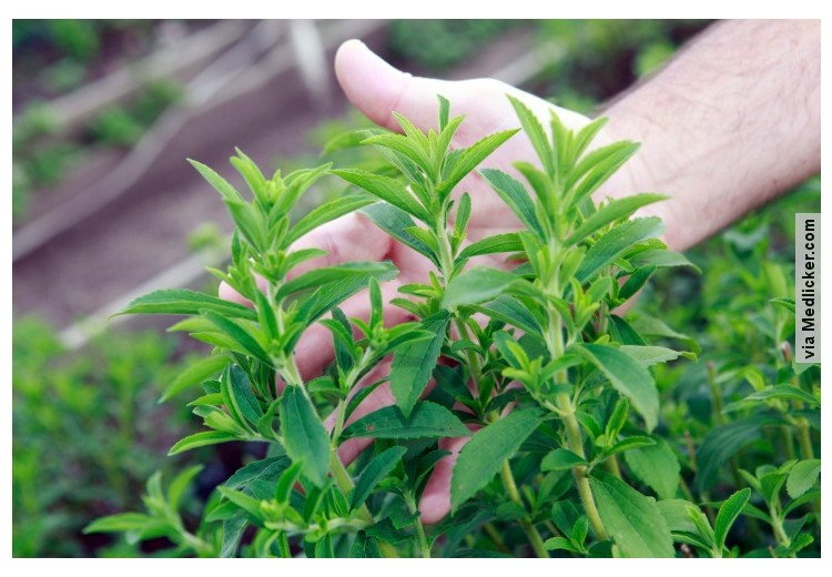 Truvia Vs Stevia: Which is better?
