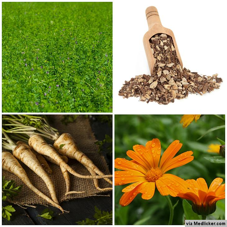 Herbal remedies for constipation - Calendula, Parsley, Irish Moss, Alfalfa