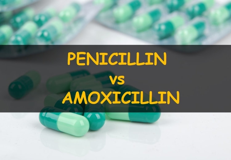 Penicillin vs Amoxicillin