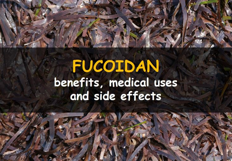 Fucoidan, its benefits, side effects and uses