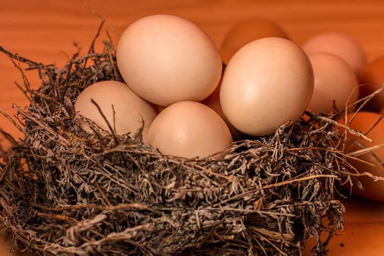 Vajíčka v hnízdě