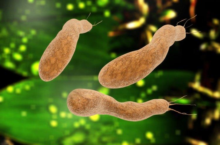 Helicobacter Pylori 3D