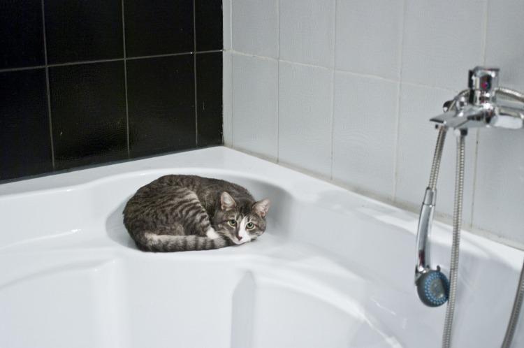 Kočka na vaně