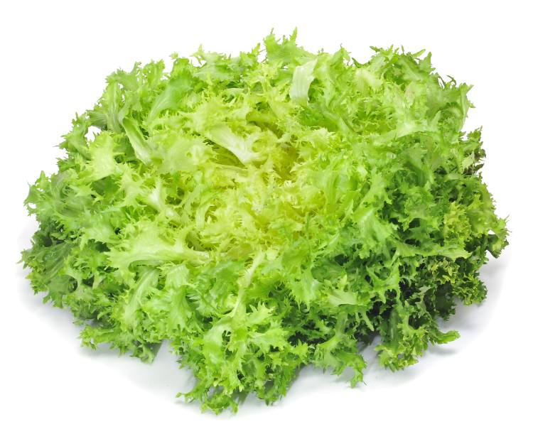 Endive (Escarole) its health benefits, nutritional values ...