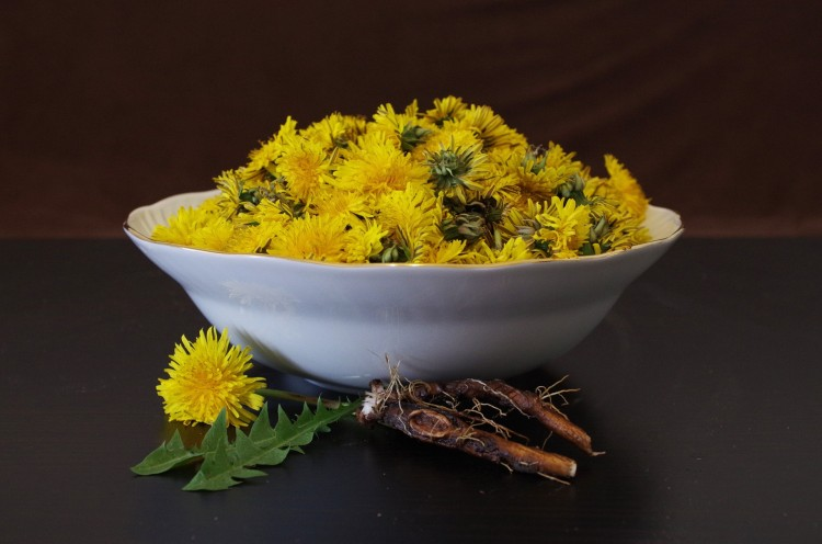 Dandelion root and flowers in bowl