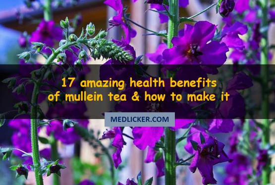 17 amazing benefits of mullein tea
